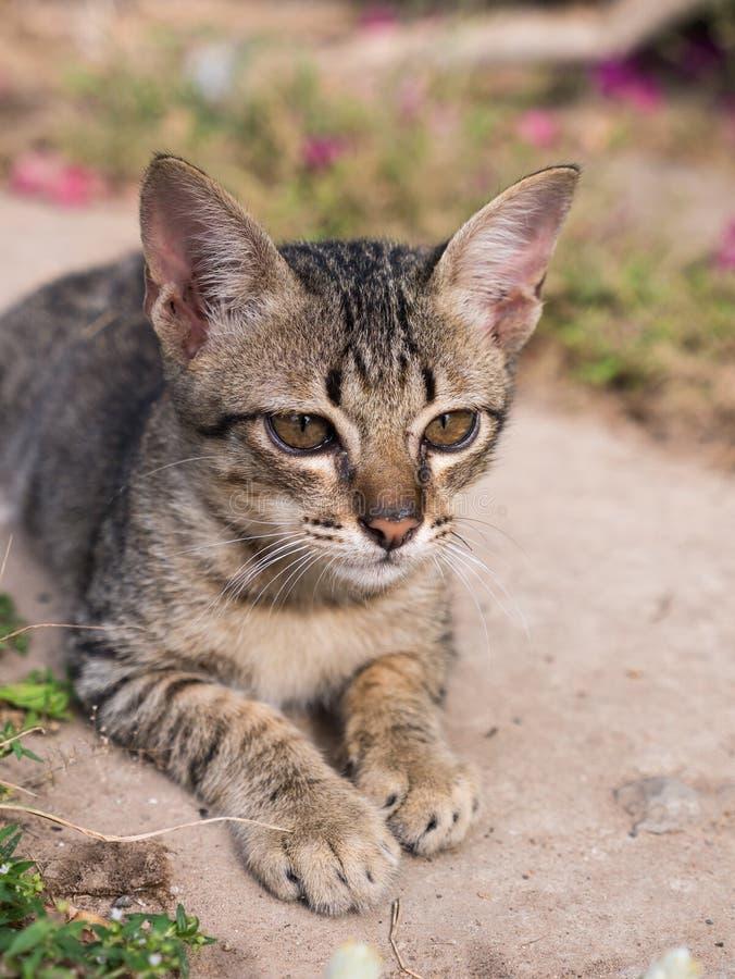 Τιγρέ γατάκι που εγκαθιστά στον κήπο στοκ φωτογραφίες