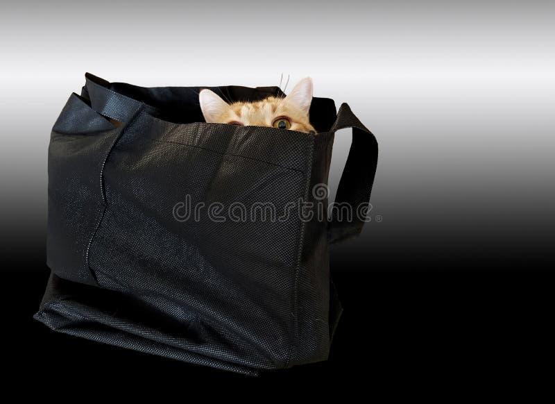 τιγρέ κρύψιμο γατών στη μαύρη τσάντα στοκ φωτογραφία