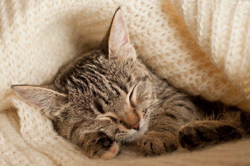 Τιγρέ ύπνος γατακιών στοκ φωτογραφία με δικαίωμα ελεύθερης χρήσης