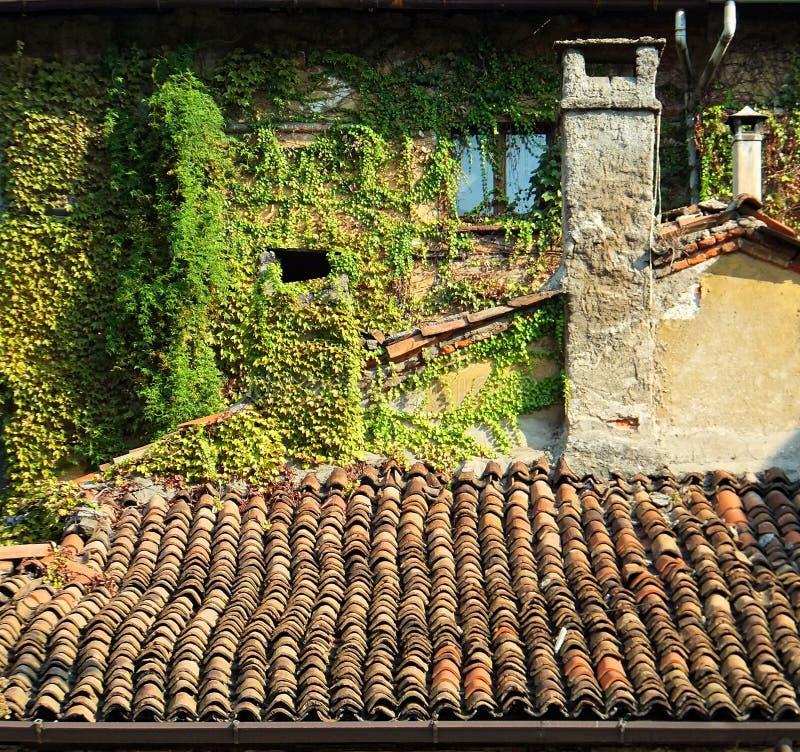 Τμήμα ενός παλαιού σπιτιού με δύο καπνοδόχους και μια κεραμωμένη στέγη, με έναν τοίχο πίσω από καλυμμένος σε μια πράσινη άμπελο στοκ φωτογραφίες