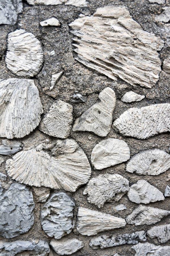 Τοίχοι που γίνονται αρχαίοι από το κοράλλι θάλασσας στοκ εικόνες