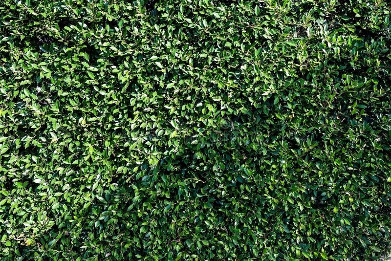Τοίχος δέντρων στοκ εικόνα