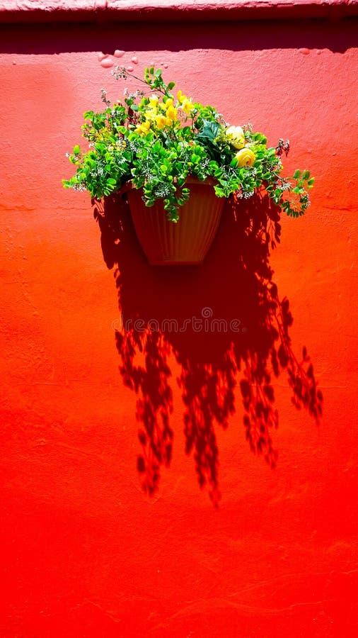 Τοίχος κόκκινου χρώματος και λουλούδι εγκαταστάσεων στοκ φωτογραφία με δικαίωμα ελεύθερης χρήσης
