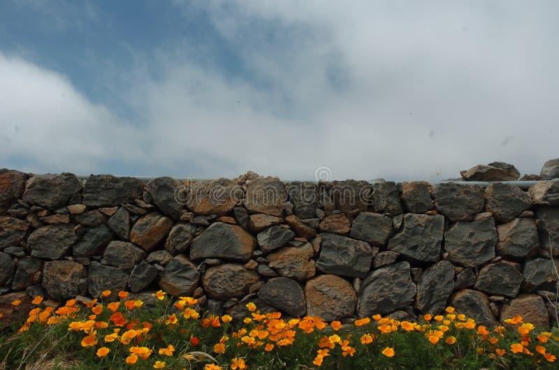 Τοίχος με τις παπαρούνες στοκ φωτογραφίες με δικαίωμα ελεύθερης χρήσης