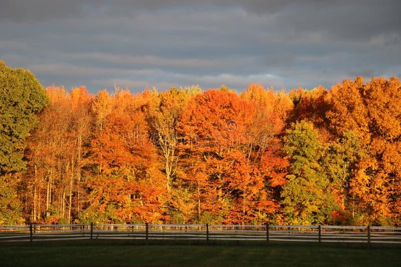 Τοίχος των δέντρων φθινοπώρου σε μια θύελλα στοκ φωτογραφίες