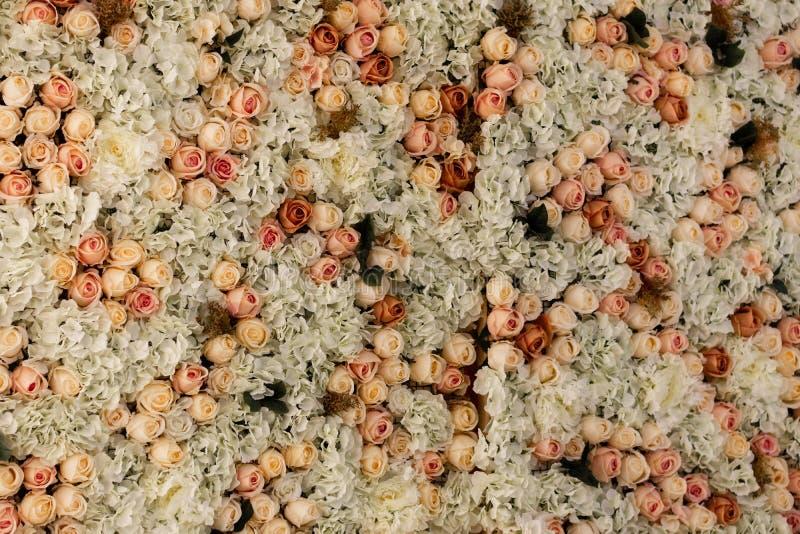 Τοίχος των τριαντάφυλλων των διάφορων χρωμάτων στοκ εικόνες με δικαίωμα ελεύθερης χρήσης