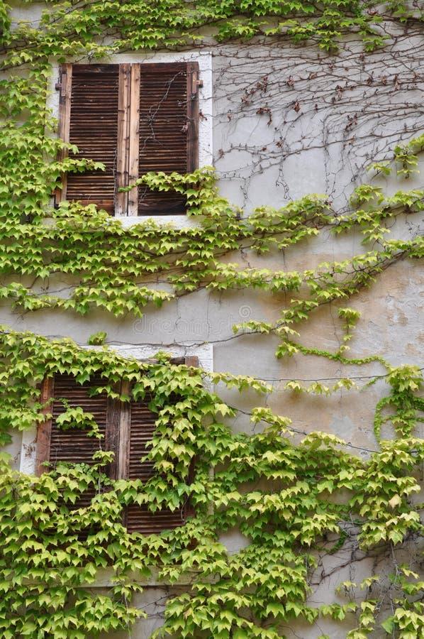 Τοίχος δύο παράθυρα που εισβάλλονται με με το κρασί στοκ εικόνες