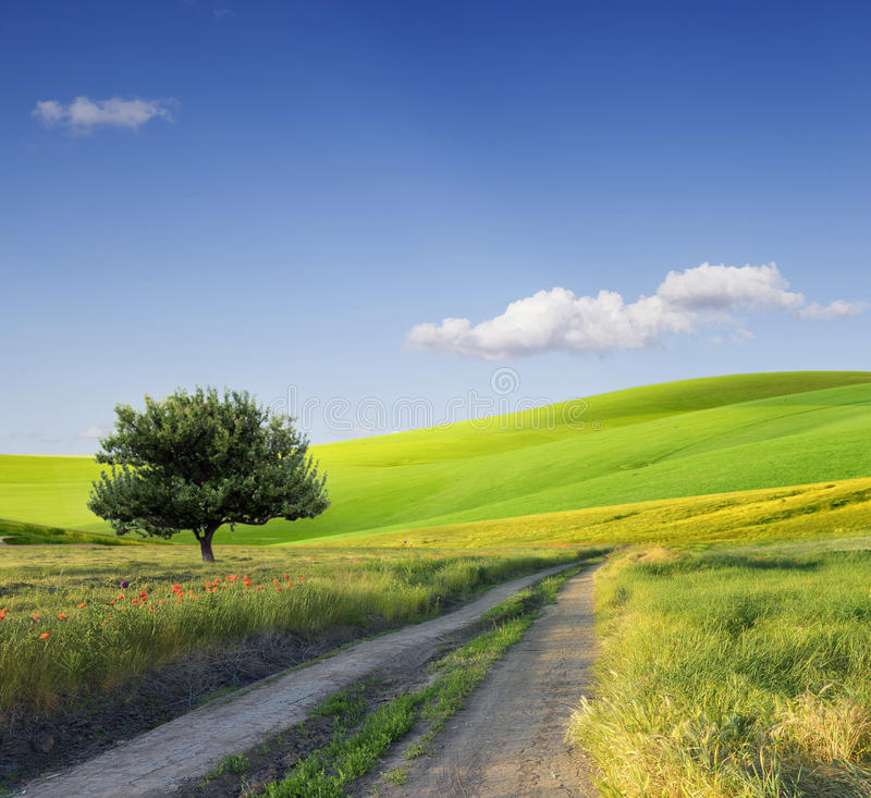 Τομέας, δέντρο και μπλε ουρανός στοκ φωτογραφίες με δικαίωμα ελεύθερης χρήσης