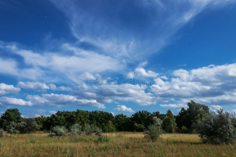 Τομέας και δάσος κάτω από τον ουρανό στοκ φωτογραφία με δικαίωμα ελεύθερης χρήσης