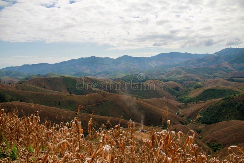 Τομέας καλαμποκιού στο λόφο στοκ εικόνες με δικαίωμα ελεύθερης χρήσης