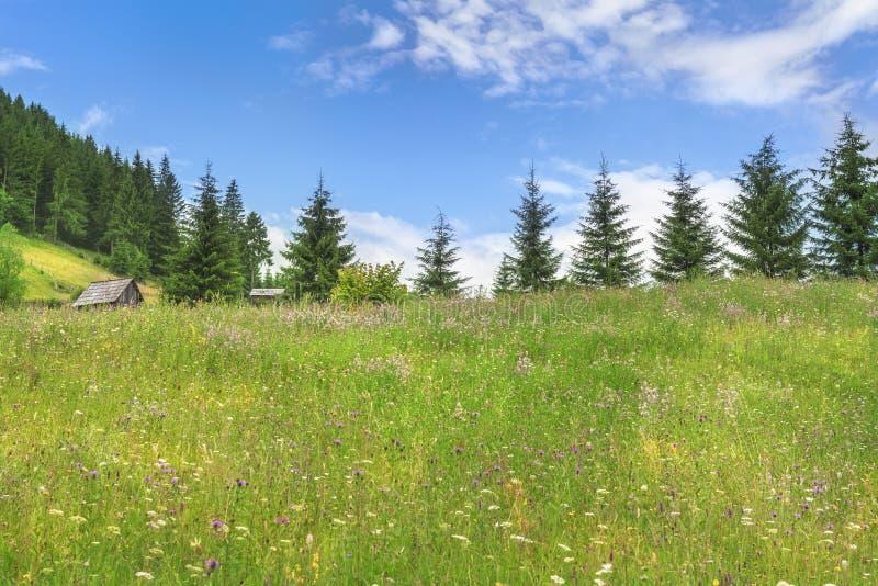 Τομέας με τα λουλούδια και τα δάση έλατου το καλοκαίρι στοκ εικόνες