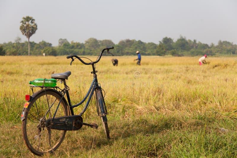 Τομέας ορυζώνα Καμπότζη στοκ εικόνες