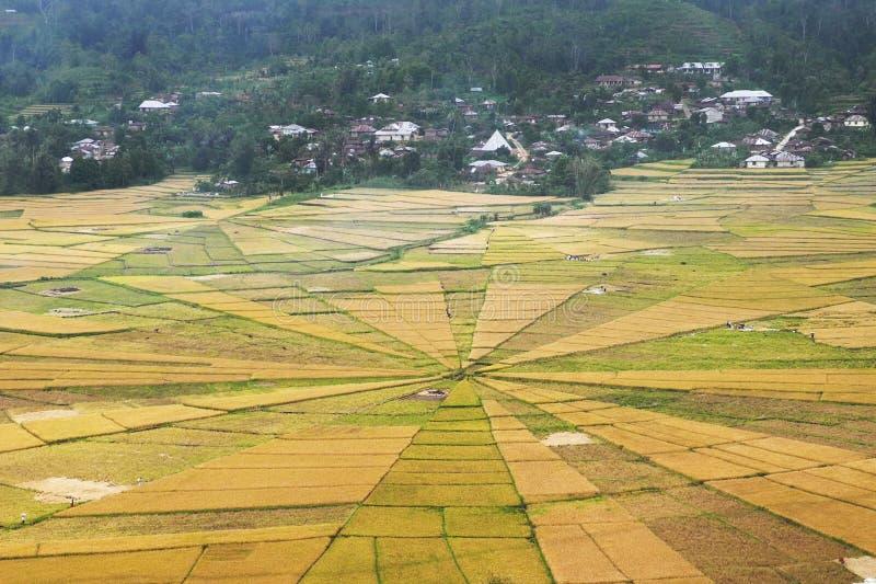 Τομέας ορυζώνα ρυζιού Ιστού αραχνών στοκ φωτογραφία με δικαίωμα ελεύθερης χρήσης