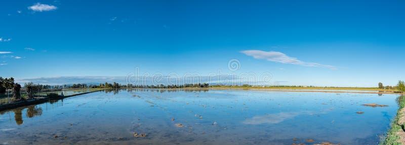Τομέας ορυζώνα ρυζιού στο δέλτα Έβρου, Ισπανία Αντανάκλαση νερού μπλε ουρανού στοκ φωτογραφίες