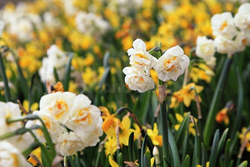 Τομέας λουλουδιών στοκ εικόνα