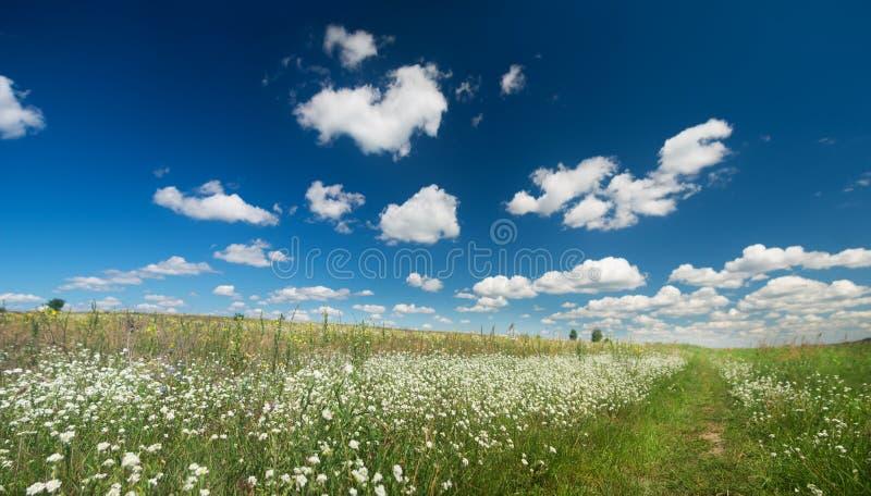 Τομέας που καλύπτεται θερινός με τα λουλούδια στοκ φωτογραφίες με δικαίωμα ελεύθερης χρήσης