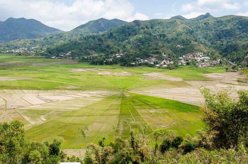 Τομέας ρυζιού αραχνών Cancar στοκ φωτογραφία με δικαίωμα ελεύθερης χρήσης