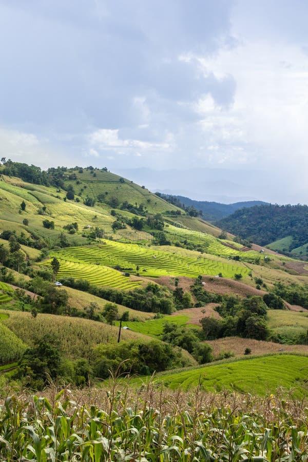 Τομέας ρυζιού πεζουλιών στο λόφο στοκ εικόνες