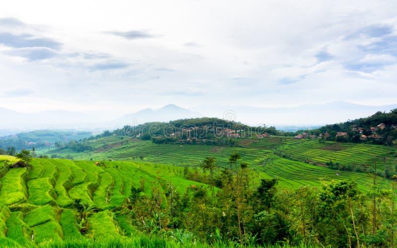 Τομέας ρυζιού σε Sumedang, δυτική Ιάβα, Ινδονησία στοκ εικόνα