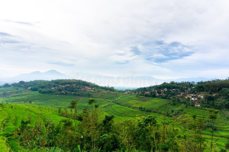 Τομέας ρυζιού σε Sumedang, δυτική Ιάβα, Ινδονησία στοκ φωτογραφία