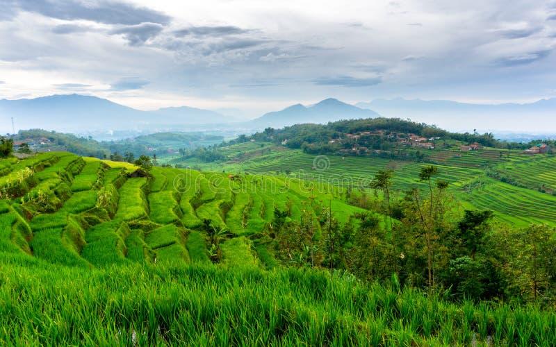 Τομέας ρυζιού σε Sumedang, δυτική Ιάβα, Ινδονησία στοκ φωτογραφία με δικαίωμα ελεύθερης χρήσης