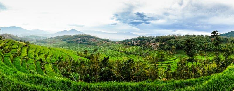 Τομέας ρυζιού σε Sumedang, δυτική Ιάβα, Ινδονησία στοκ φωτογραφίες με δικαίωμα ελεύθερης χρήσης