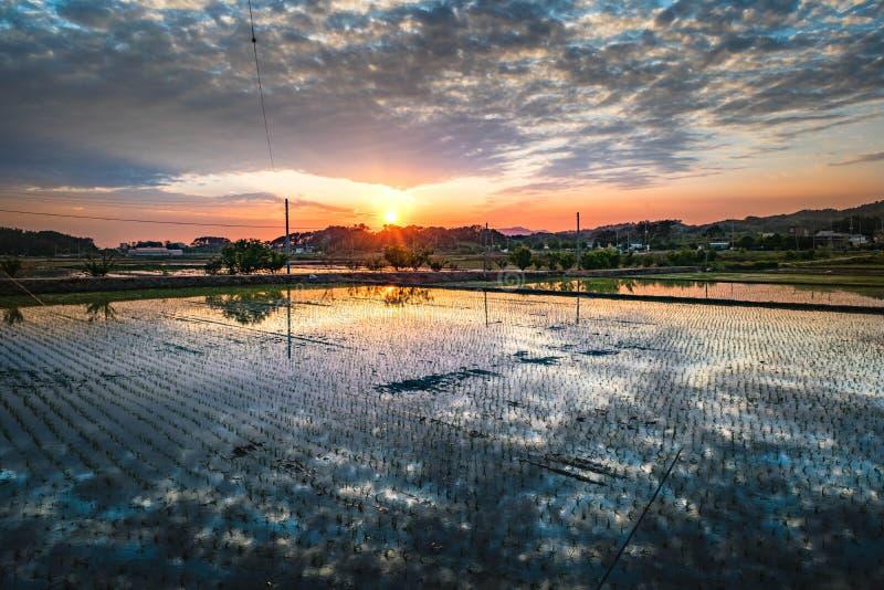 Τομέας ρυζιού στην αγροτική Κορέα στοκ φωτογραφίες