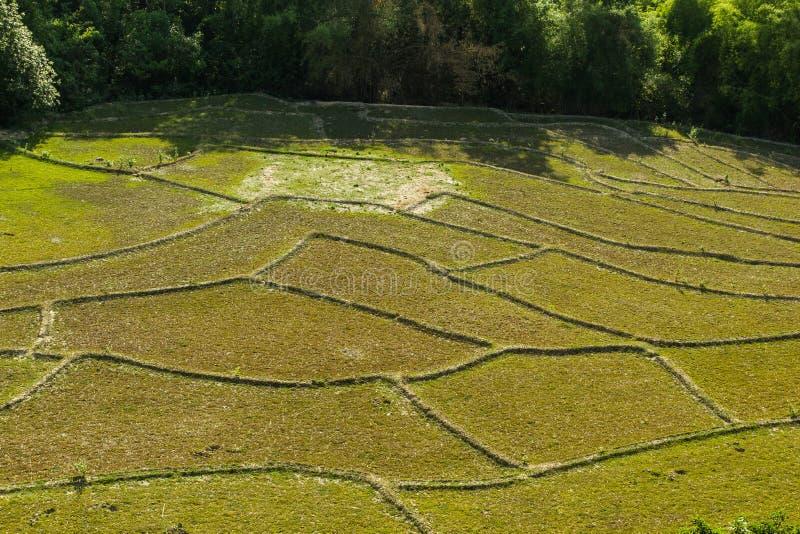 Τομέας ρυζιού στην ξηρασία στοκ φωτογραφίες με δικαίωμα ελεύθερης χρήσης