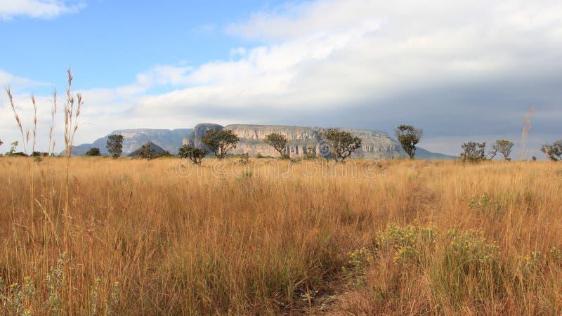 Τομέας σαβανών και άποψη του φαραγγιού ποταμών Blyde στοκ φωτογραφία με δικαίωμα ελεύθερης χρήσης