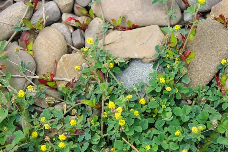 Τομέας της πράσινων χλόης και των wildflowers στοκ φωτογραφία με δικαίωμα ελεύθερης χρήσης