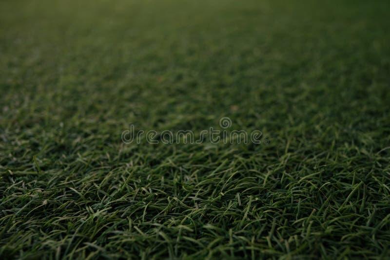 Τομέας του φρέσκου πράσινου φυσικού υποβάθρου σύστασης χλόης χορτοταπήτων στοκ εικόνες