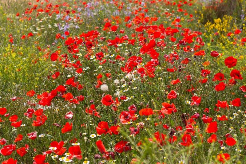 Τομέας των λουλουδιών στοκ εικόνες