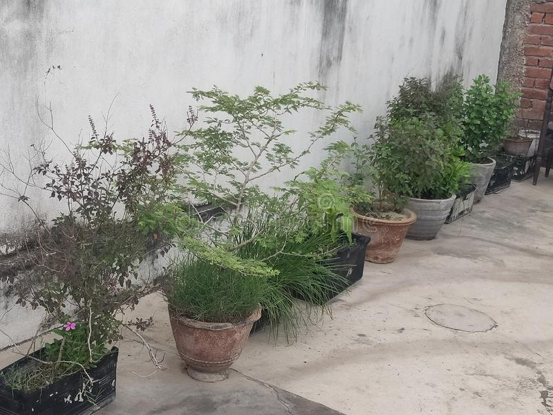 Τομέας FertilityGreen καθώς επίσης και πράσινο βουνό κατά την τακτοποιημένη και καθαρή άποψη κρατικού πρωινού της Ινδίας στοκ εικόνα