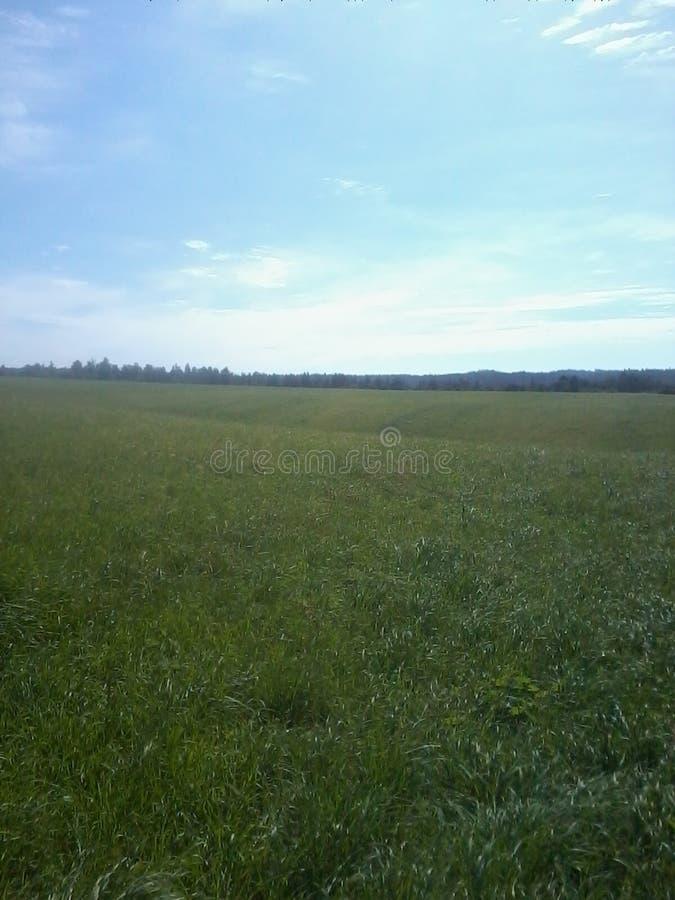 Τομέας Snegirevka δασικό τοπίο ημέρας ηλιόλουστο ουρανός στοκ εικόνες