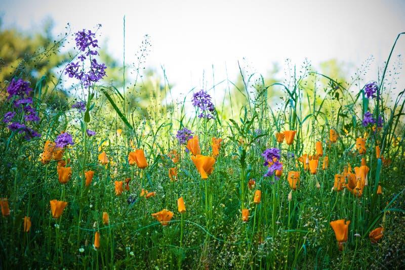 Τομέας Wildflowers στοκ εικόνες με δικαίωμα ελεύθερης χρήσης