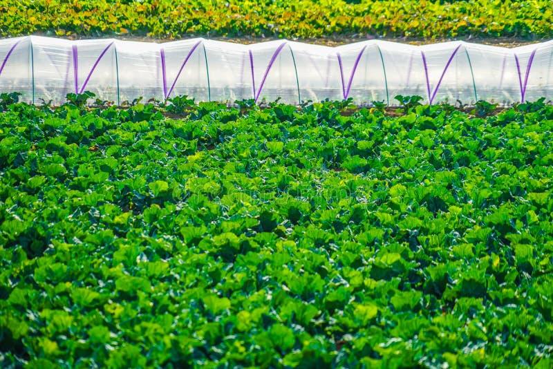 Τομείς και θερμοκήπια λάχανων στοκ φωτογραφία με δικαίωμα ελεύθερης χρήσης