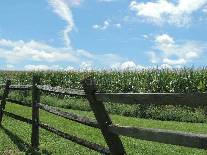 Τομείς καλαμποκιού του Τένεσι που περικυκλώνονται από τον αγροτικό φράκτη ένα μπλε στοκ φωτογραφία με δικαίωμα ελεύθερης χρήσης