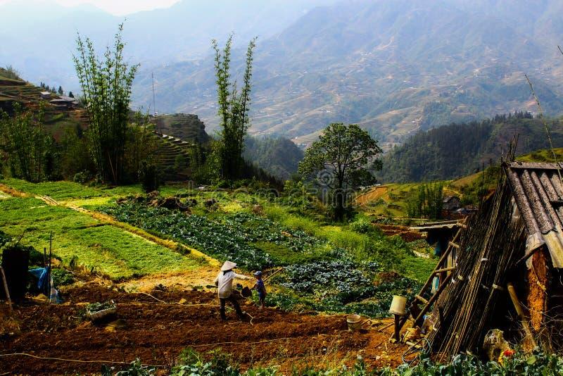 Τομείς λουλουδιών του Βιετνάμ στοκ φωτογραφία με δικαίωμα ελεύθερης χρήσης