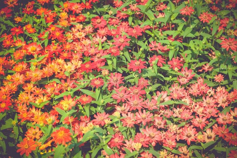 Τομείς λουλουδιών, φωτεινά χρώματα, στοκ εικόνες
