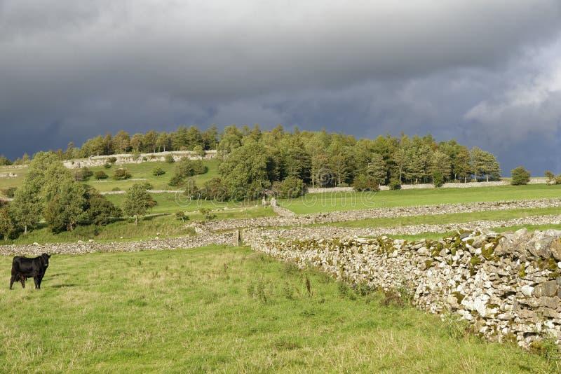Τομείς με τους τοίχους του ξηρού Stone στοκ εικόνα με δικαίωμα ελεύθερης χρήσης