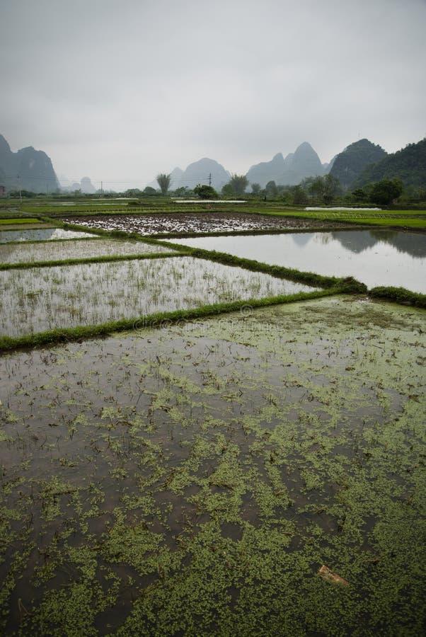 Τομείς ορυζώνα κατά μήκος του ποταμού λι σε Yangshuo (Guilin, Κίνα) στοκ φωτογραφία με δικαίωμα ελεύθερης χρήσης