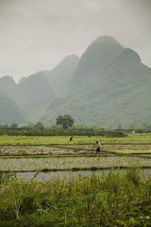 Τομείς ορυζώνα κατά μήκος του ποταμού λι σε Yangshuo (Guilin, Κίνα) στοκ εικόνες με δικαίωμα ελεύθερης χρήσης