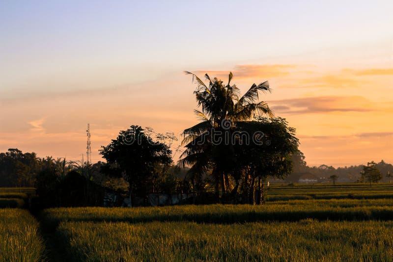 Τομείς ρυζιού στοκ εικόνες με δικαίωμα ελεύθερης χρήσης