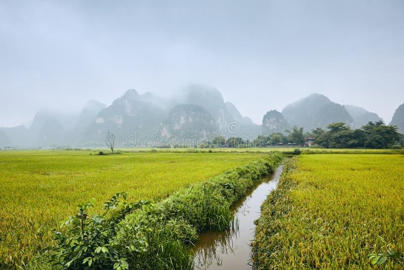 Τομείς ρυζιού ενάντια στα βουνά καρστ στοκ εικόνες