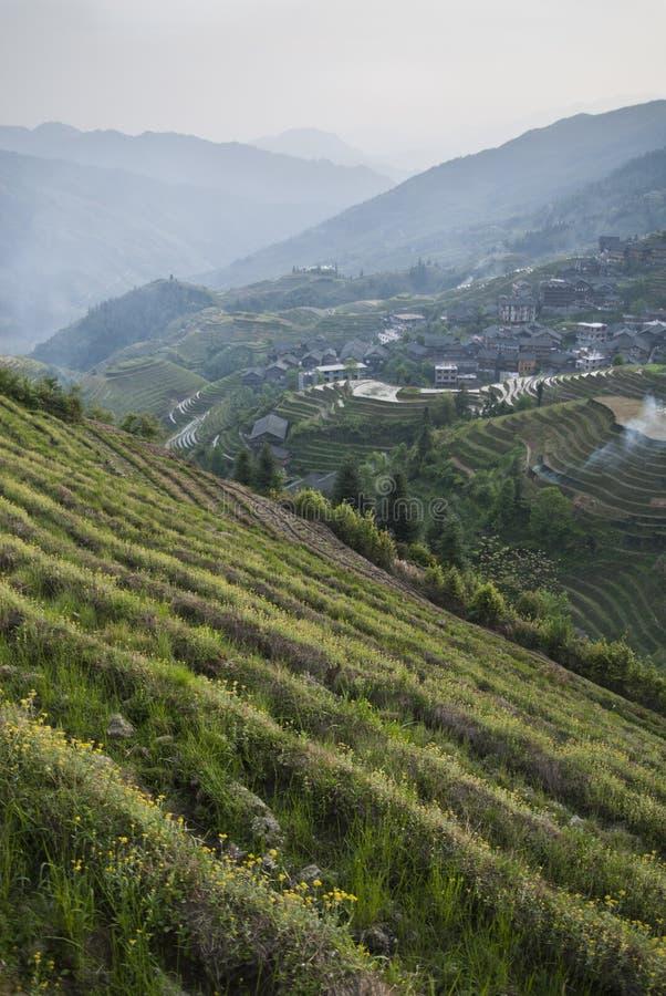 Τομείς ρυζιού (Κίνα) στοκ εικόνα