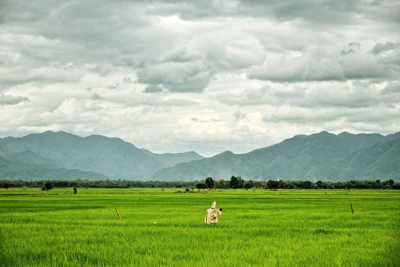 Τομείς ρυζιού με το σκιάχτρο και τα βουνά: Ταϊλάνδη στοκ εικόνα με δικαίωμα ελεύθερης χρήσης