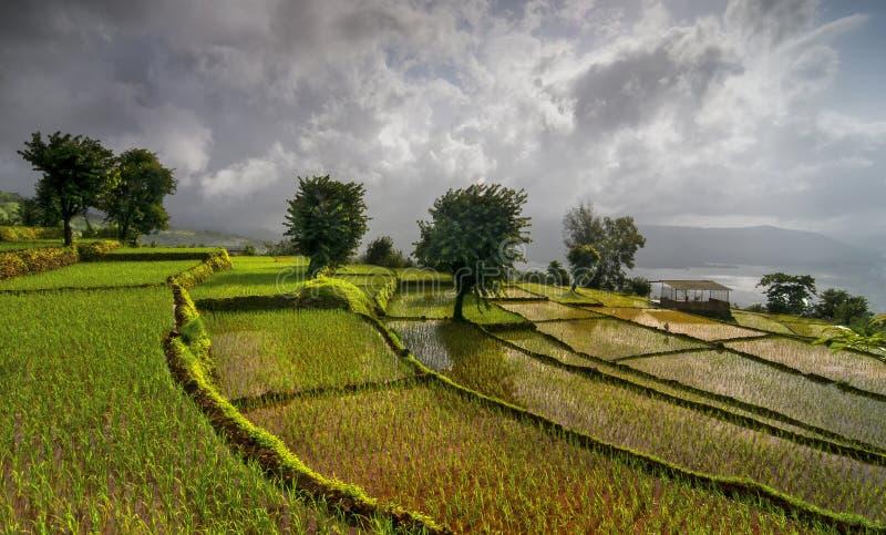 Τομείς ρυζιού πεζουλιών σε Koynanagar, Maharashtra, Ινδία στοκ φωτογραφίες