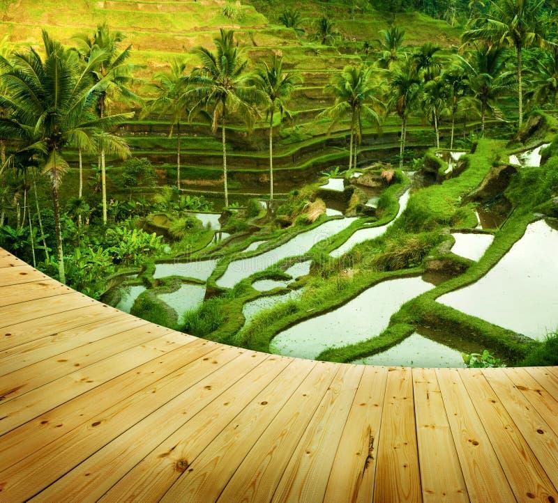 Τομείς ρυζιού πεζουλιών στοκ φωτογραφίες