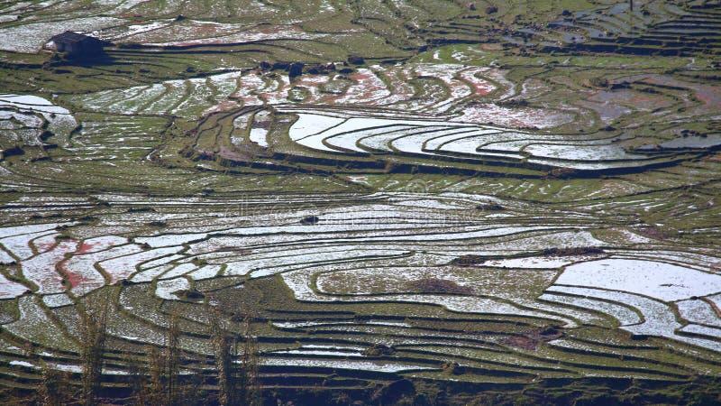 Τομείς ρυζιού πεζουλιών στοκ εικόνα με δικαίωμα ελεύθερης χρήσης
