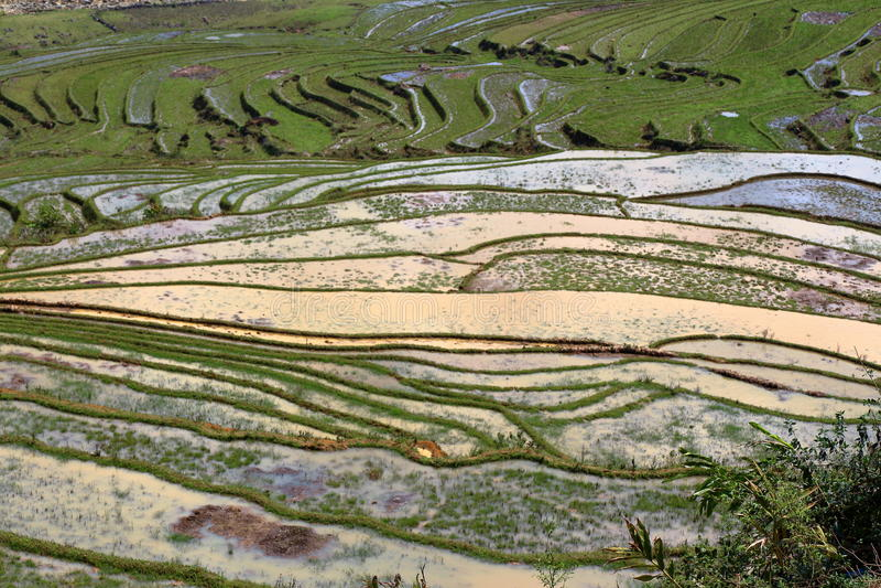 Τομείς ρυζιού πεζουλιών στοκ εικόνα